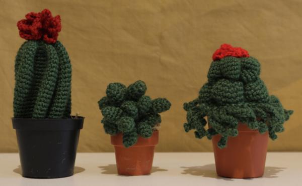 cactus1-min